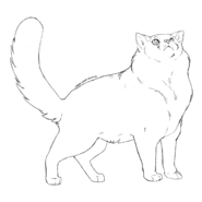 Garde Caverne - British longhair 1