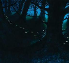 Forêt Sombre.png