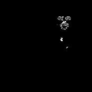 Aspirant - Oriental Shorthair 2