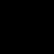 Reine - Oriental Shorthair 2