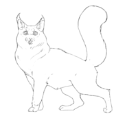 Apprenti Guérisseur - Main Coon 2