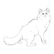 Solitaire - Ragdoll