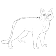 Horde - British Shorthair 2