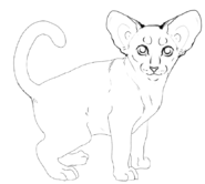 Chaton - Oriental Shorthair 2