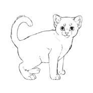 Chaton - American shorthair