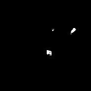 Soigneur - Main Coon