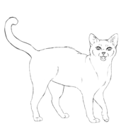 Guérisseur - Aegean short variente