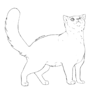 Garde Caverne - British Shorthair 1
