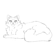 Ancien - British Longhair 2