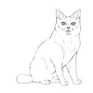 Soigneur - American bobtail 1