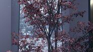 Baum im Kamski-Anwesen