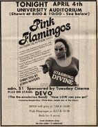 Devo Pink Flaimingos 1975