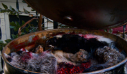Barrel of dead animals 4