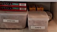 Intestines and Kidneys 803
