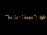 Episode 303: The Lion Sleeps Tonight