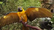 21 Macaw startles Debra S3E11