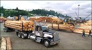 Lumber camp S8E12