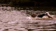 Deb swims to Dexter S8E