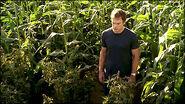 Dexter finds pot farm in a corn field