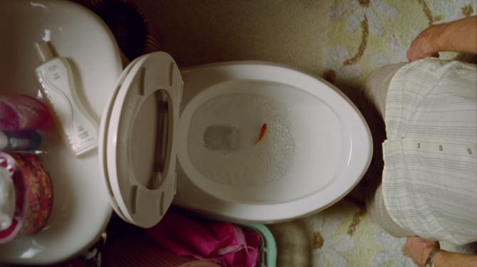 Bob the Goldfish: