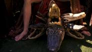 Alligators S6E8