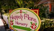 Hannah's sign