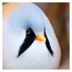 BartSpenceIII's avatar