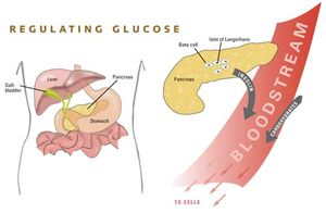 Glucose.jpg