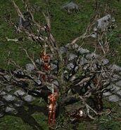 Blood Raven cemetary tree