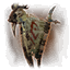 Harvest (pennant) icon.png