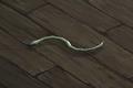 Snake (white) Companion.png