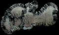 Regions arreat dreadlands.png