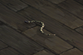 Snake (white with black blotches) Companion.png