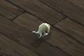 Rabbit Companion.png