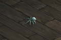 Spider Companion.png