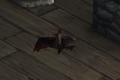 Bat Companion.png
