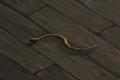 Snake (brown) Companion.png
