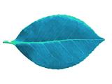 Strange Leaf