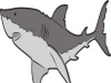 Shark (Food)