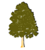 GoldTree.png