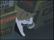 Miko is inside the truck