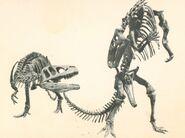 Allosaurus-Camptosaurus-LACM-skeletons-1000x748