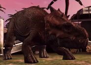 Pachyrhinosaurus JW