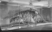 Brontosaurusgreatdinohall1927