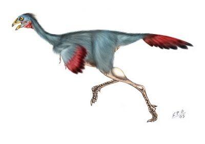 Caudipteryx.jpg