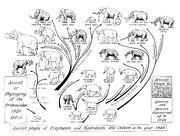 Elephant Family Tree 1926.jpg