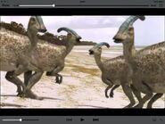 Four Parasaurolophus