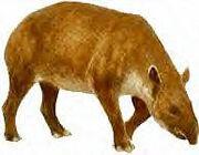 Miotapirus.jpg