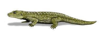Tokosaurus.jpg