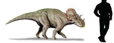 Avaceratops.jpg